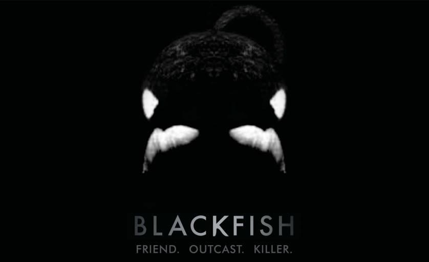 SeaWorld Admits <em>Blackfish</em> documentary has hurt attendance