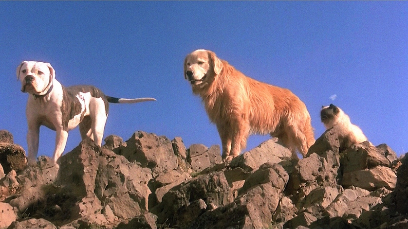 homeward-bound-dogs