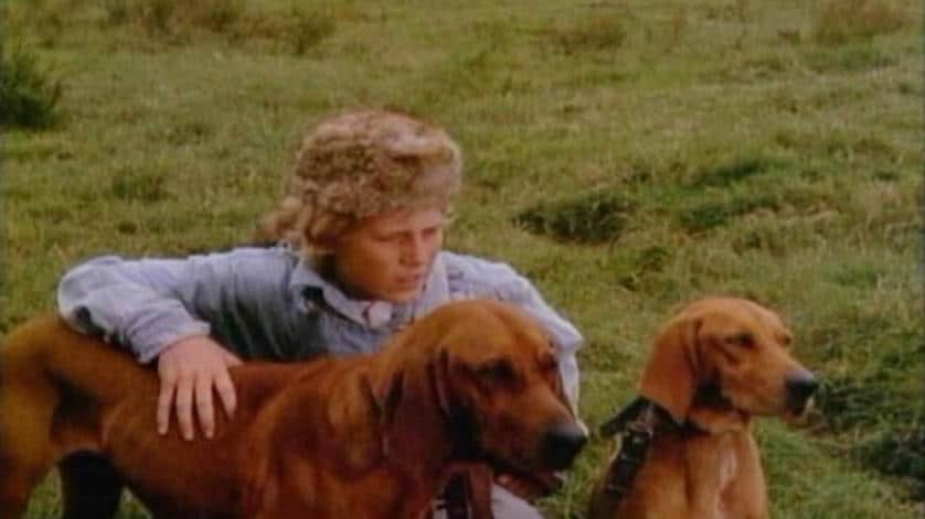 red-fern-dogs