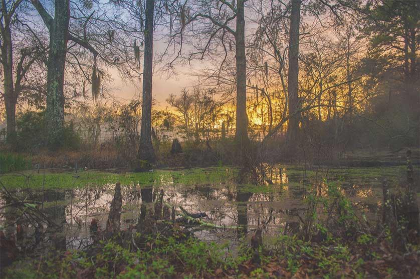 John Schneider Studios to Host 'Shakespeare in the Swamp'
