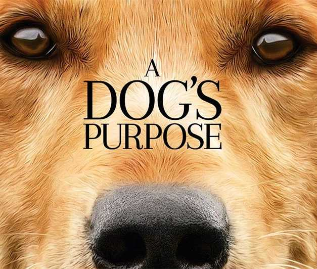 Blu-ray Review: 'A Dog's Purpose' Is A Steady Tearjerker For Dog Lovers