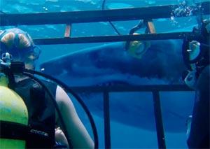 47-Meters-Down-Shark