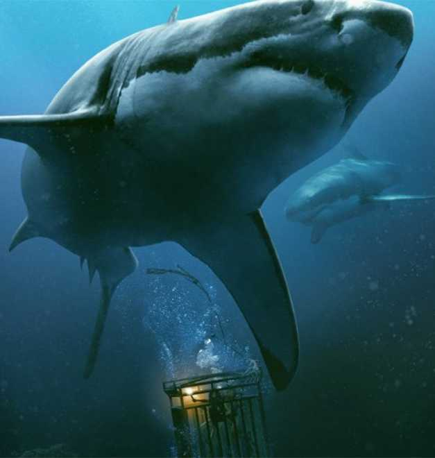 Review: '47 Meters Down' Is Exasperating Entertainment In A Predictable Package